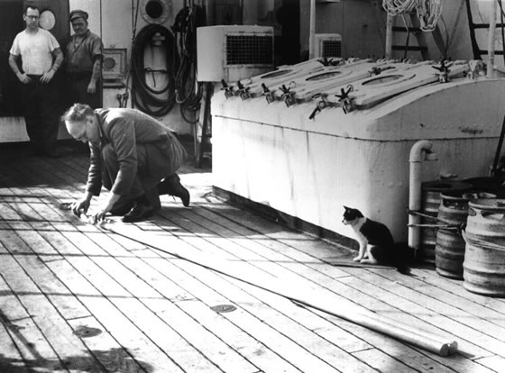 John Swallow assembling a float on RRS Discovery II, watched intently by two matelots and the ship's cat